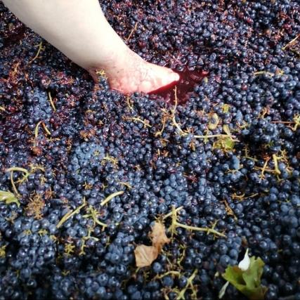 El pisado de uvas
